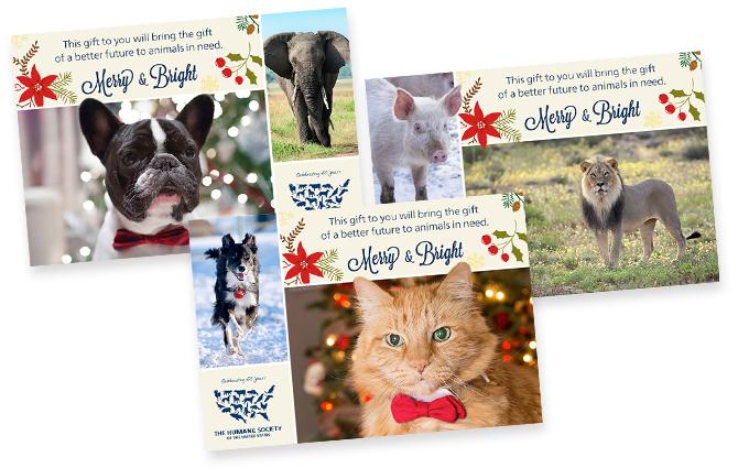 Holiday Card Print Design